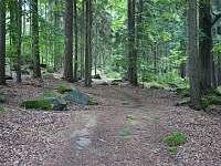 Okolní lesy - Nemojov - Starobucké Debrné