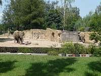 ZOO a Safari Dvůr Králové - Nemojov - Starobucké Debrné