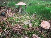 Houby v lese