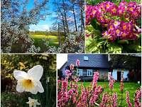 Zahrada na jaře - chalupa k pronájmu Kocbeře