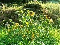 Zahrada - chalupa k pronájmu Strážné