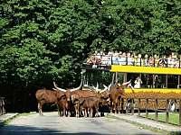 Zoo Safari DKn/L - Trutnov - Bojiště