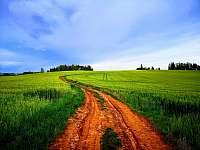 Cesta na Krkonošskou vyhlídku (cca 1,5 km). - Bukovina u Pecky