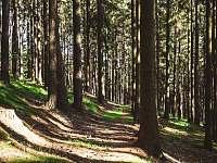 V lese - Vrchlabí - Herlíkovice