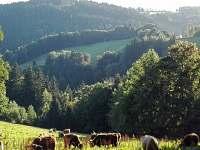 Chata Maruška - chalupa k pronajmutí - 11 Vítkovice v Krkonoších
