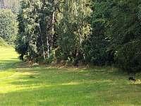 Dolní Lánov - chalupa k pronájmu - 36