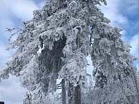 Krása zasněžené přírody v okolí - Čistá