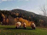 Podzim - Mostek - Debrné