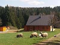 Zábava - chalupa ubytování Mostek - Debrné