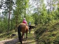 Projížďky na koních - Strážné