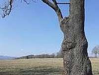 U lišky Bystroušky - Žacléř