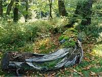 Dvorský les - Rýchorský prales - Žacléř - Prkenný Důl