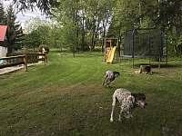 psí torpéda jsou u nás vítáni zdarma :-) - Křižlice