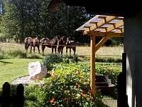 Sousedovi koně - chalupa k pronajmutí Chvaleč