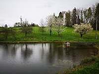 Pohled na kvetoucí třešně na břehu rybníčka - pronájem srubu Radvanice v Čechách