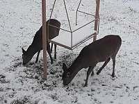 zimní návštěvníci - chata ubytování Vysoké nad Jizerou