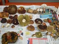 houbařská sezona - Úbočí - Místo