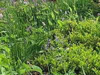 Bludenská chata  rozkvetlá zahrada - Pernink