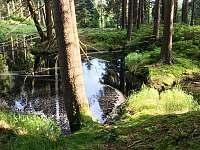 Perninský les -