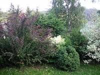Bublava - chalupa k pronájmu - 9