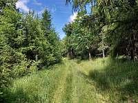 Příroda blízkého okolí - Moldava - Nové Město