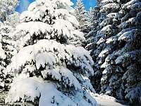 Takhle je u nás v zimě - chalupa k pronájmu Vejprty