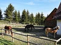 koně - ubytování Plesná
