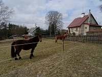 dva koníky máme za plotem