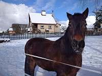 koně na pastvině - Rájec