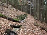 lesy - chalupa ubytování Bublava
