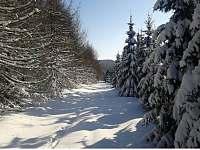 lesni cesta - Klíny