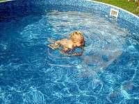 Pronájem ubytování s bazénem Skalná