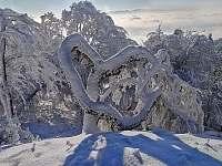zima je krušná a stromy se přizpůsobují - Horní Krupka