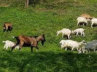 Sousední pastvina