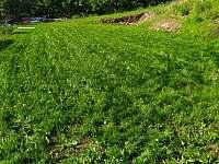 rostoucí trávník z jara roku 2020 :-) - Vejprty - Nové Zvolání