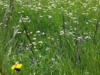 Jaro v Perninku - chalupa k pronajmutí