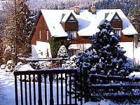 Modrinka v zime2