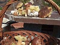 houbařský ráj - Loučná pod Klínovcem - Háj