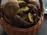 podzimní houbaření - Klíny - Rašov