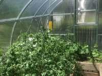 skleník U Lucerny - Kytlice
