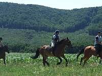 jízda na koni (nutné objednat předem) - Vranov - Bučina
