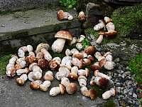 houbaři si přijdou na své - Dolní Morava