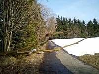 Příjezdová cesta - pronájem chaty Zdobnice v Orlických horách