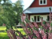 Podzim je tu nádherný - chata k pronajmutí Olešnice v Orlických horách