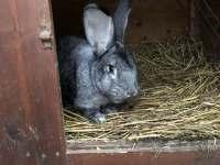hospodářská zvířata - chata k pronájmu Uhřínov pod Deštnou