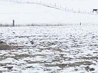 okolí chalupy v zimě - k pronájmu Orlické Záhoří