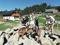 zookoutek u penzionu Jiřinka - pronájem chaty Dolní Morava