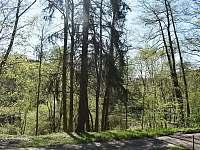 před chatou na jaře - k pronájmu Klášterec nad Orlicí - Zbudov