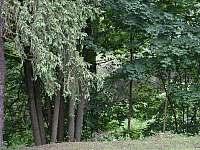 před chatou v létě - Klášterec nad Orlicí - Zbudov