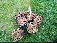 houbařský ráj :-D - roubenka k pronajmutí Bartošovice v Orlických horách - Neratov